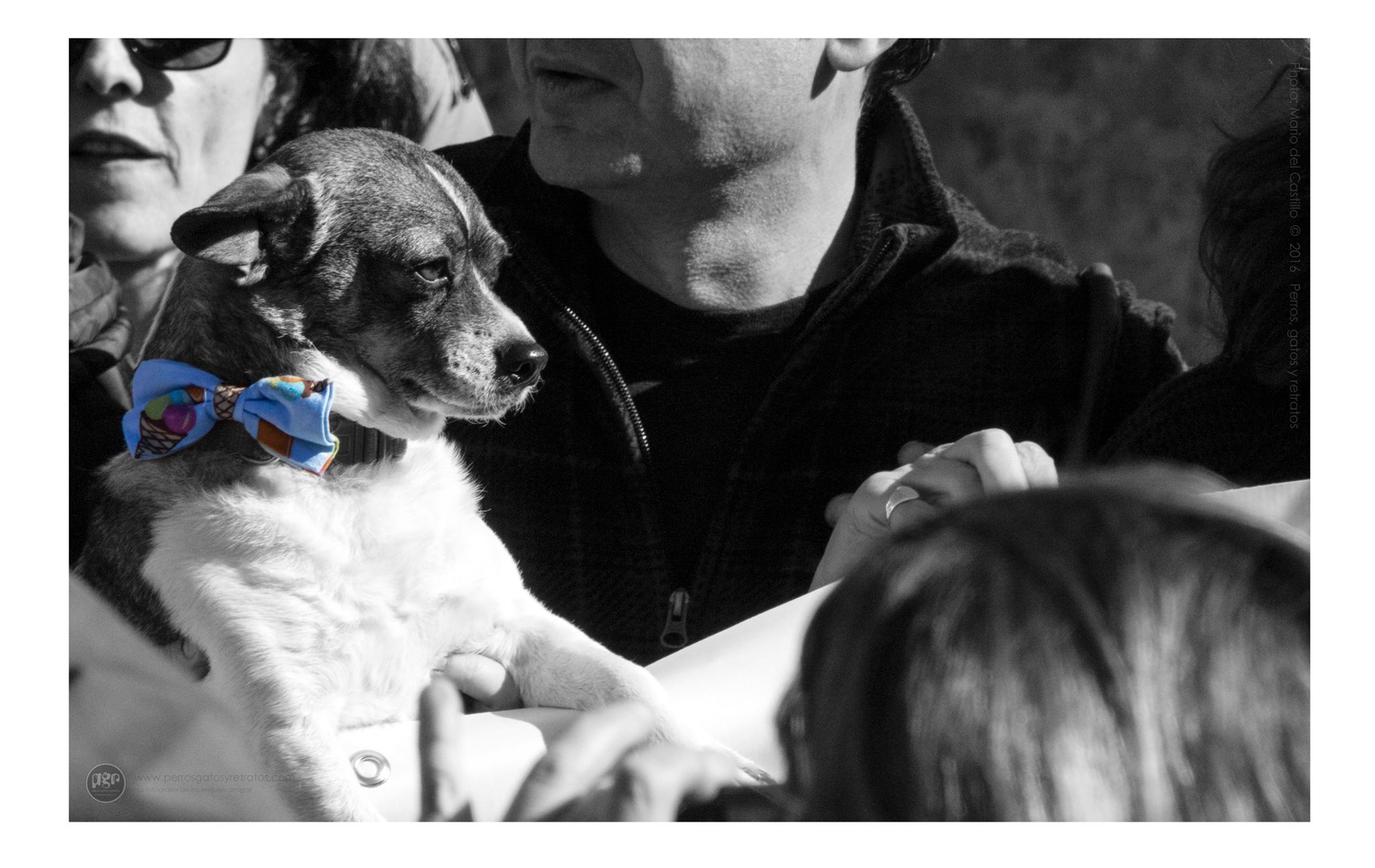 Spanish town is world's first to enact Bill of Rights for pets
