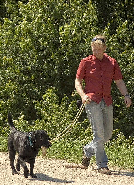 Avoid a confrontation with a reactive dog while walking your pet