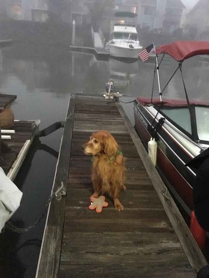 This pet hero helped save a man from drowning in Northern California