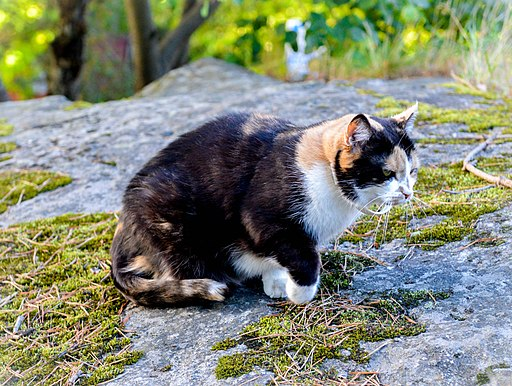 Cats that spend time outdoors are affected by climate, disease, injury and prey