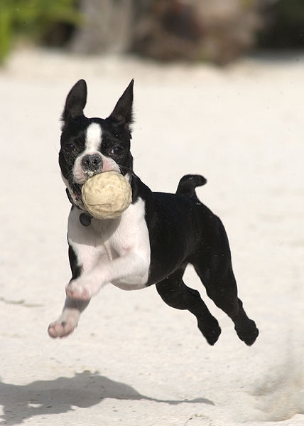 Whatever the exercise, consistency is key to keeping your dog active, healthy and happy