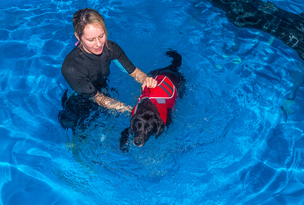 Rehabilitation like other veterinary specialties becoming mainstream can help restore a dog's mobility