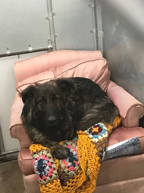 West Valley Humane Society shelter dogs love their armchairs, especially when they are a perfect fit!
