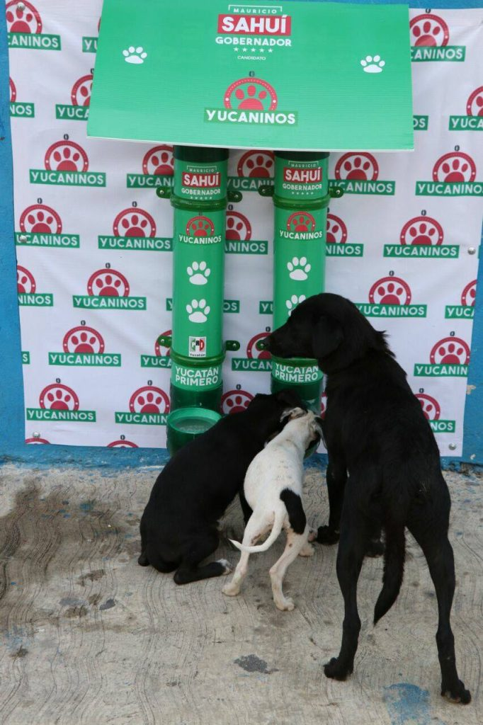 Feeders and waterers were installed in Mérida, Yucatán, by Mexico's street dog heroes