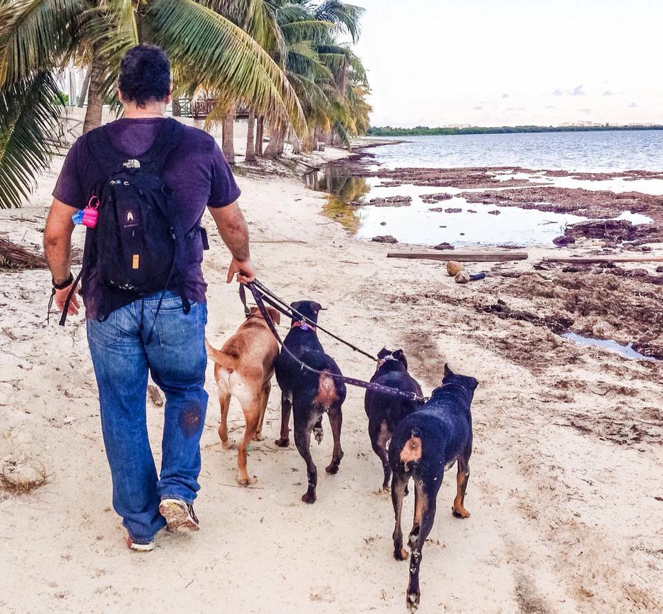 Here is Chica doing her favorite thing, walking on the beach with dad and pals