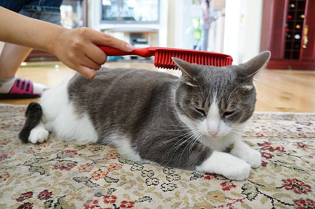 Cat being groomed with a long-handled rubber brush Credit: Photo by Jiaqian AirplaneFan