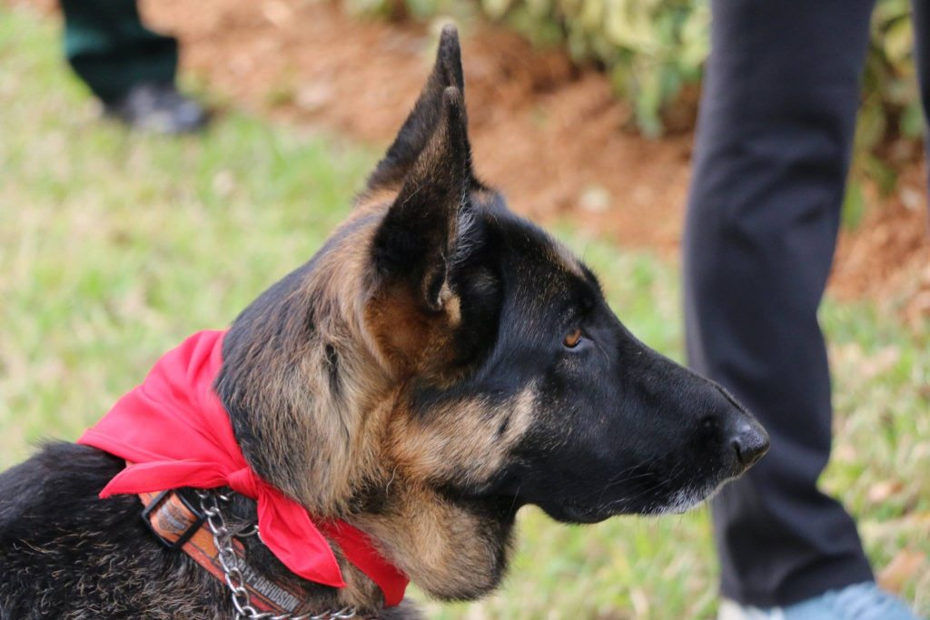 Somehow this handsome working dog knew who we were memorializing that day