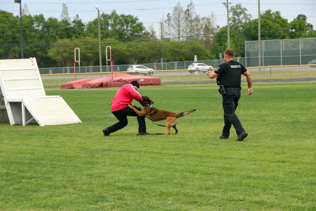 These demos are thrilling to watch, but in actual fact the dogs bite less than 16 percent of the suspects they apprehend
