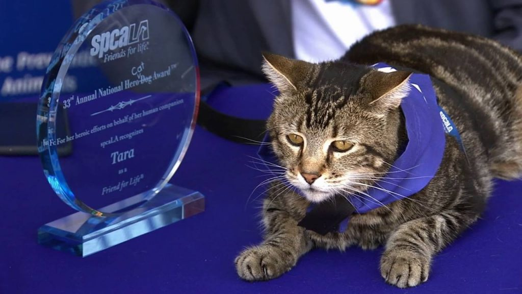For the very first time, a Los Angeles shelter's Hero Dog award went to a cat!