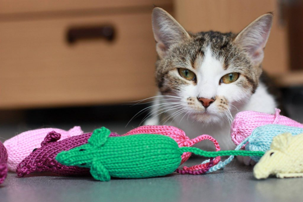 This temporary shelter resident is happy to show off the colorful handmade mice donated by caring knitters Photo courtesy of Battersea Dogs and Cats Home