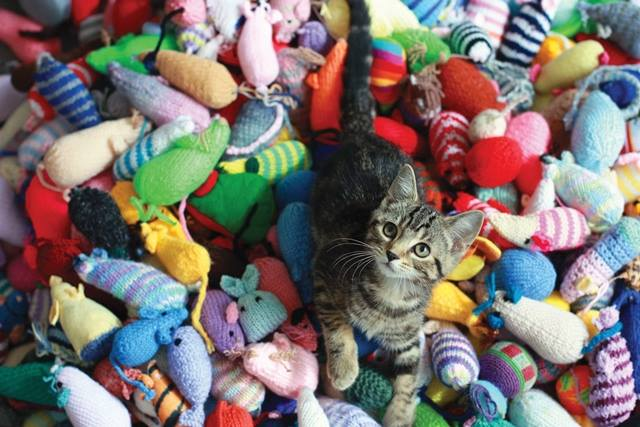 Knitted toys provide enrichment for the kitties waiting to be claimed by their owners or be rehomed Photo courtesy of Battersea Dogs and Cats Home