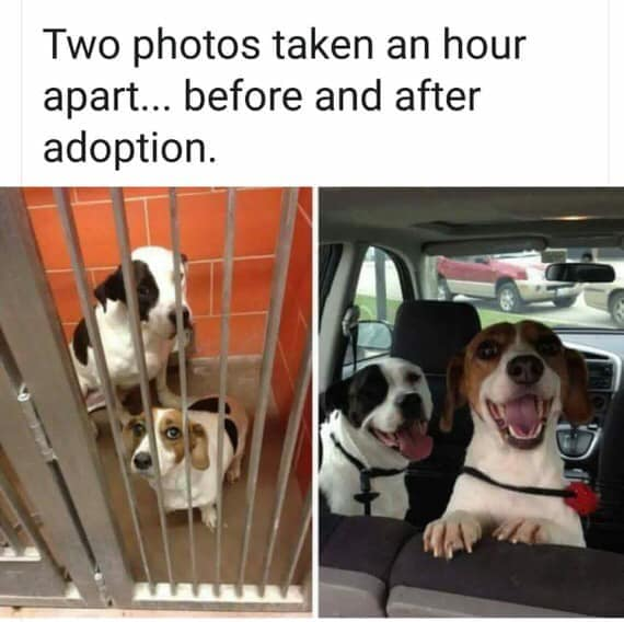 This is how just adopted dogs react when they realize they have a home