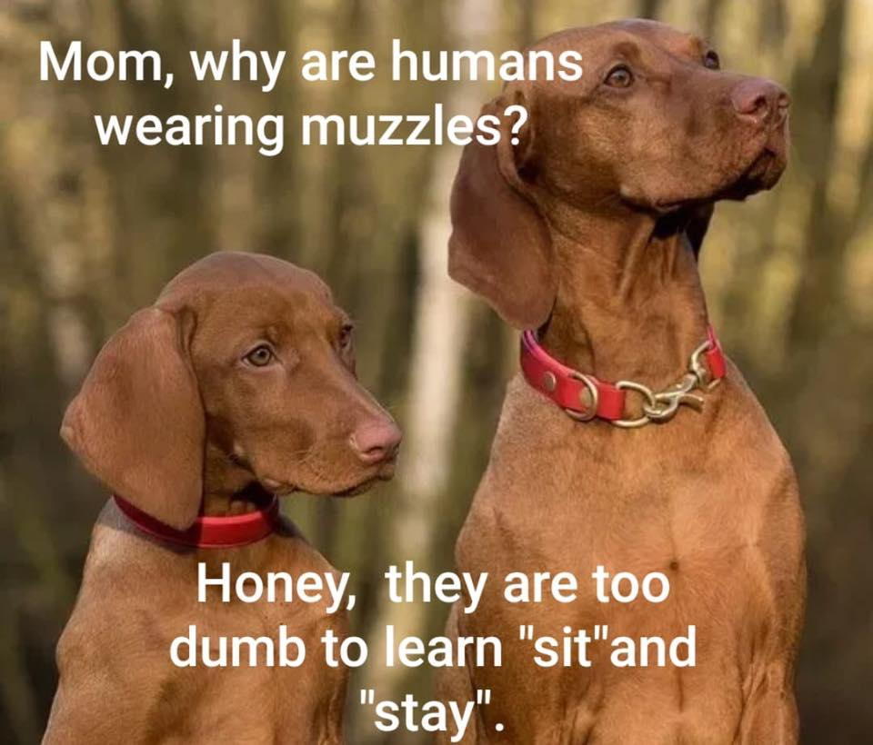 Humans have muzzles and dogs have masks, or is it the other way round?